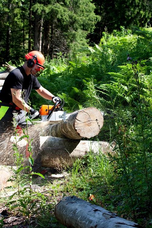 Waldarbeit 8